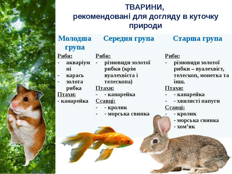 ТВАРИНИ, рекомендовані для догляду в куточку природи Молодша група Середня гр...