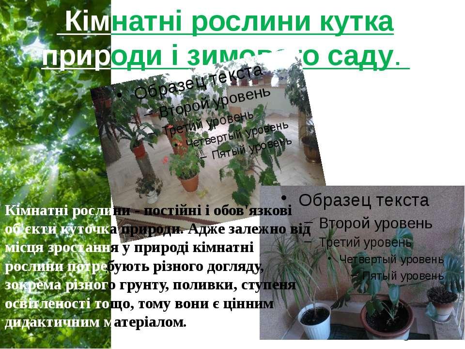 Кімнатні рослини кутка природи і зимового саду. к Кімнатні рослини - постійні...