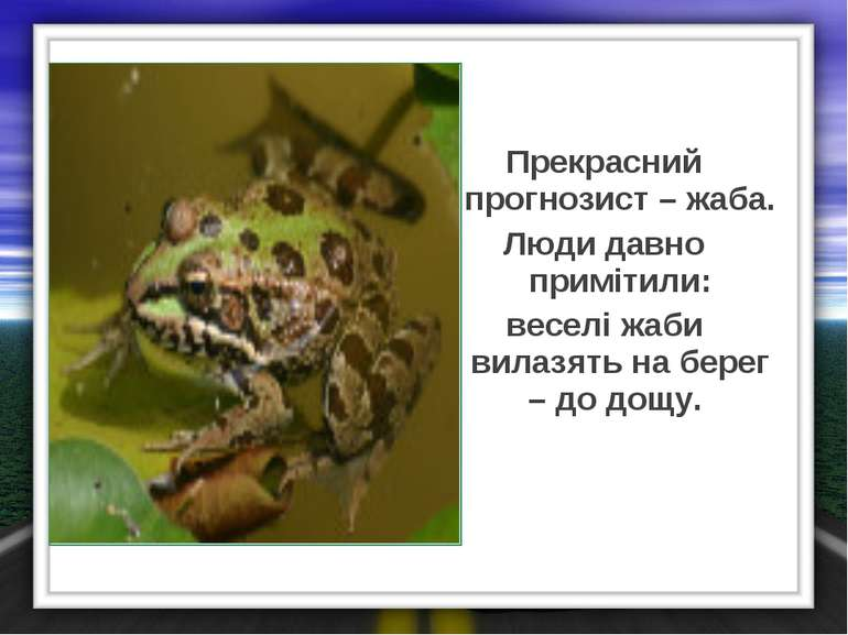 Прекрасний прогнозист – жаба. Люди давно примітили: веселі жаби вилазять на б...