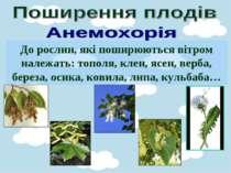 До рослин, які поширюються вітром належать: тополя, клен, ясен, верба, береза...