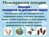 Насіння рослин, які поширюються тваринами мають гачечки, щетинки, шипи, клейк...