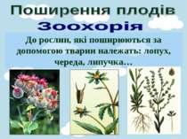 До рослин, які поширюються за допомогою тварин належать: лопух, череда, липучка…