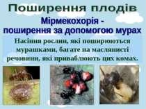 Насіння рослин, які поширюються мурашками, багате на маслянисті речовини, які...