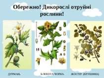 Обережно! Дикорослі отруйні рослини!  ДУРМАН. БЛЕКОТА ЧОРНА. ЖОСТІР (КРУШИНА)