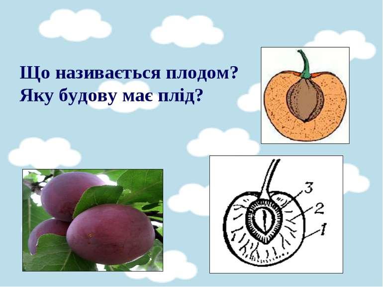Що називається плодом? Яку будову має плід?