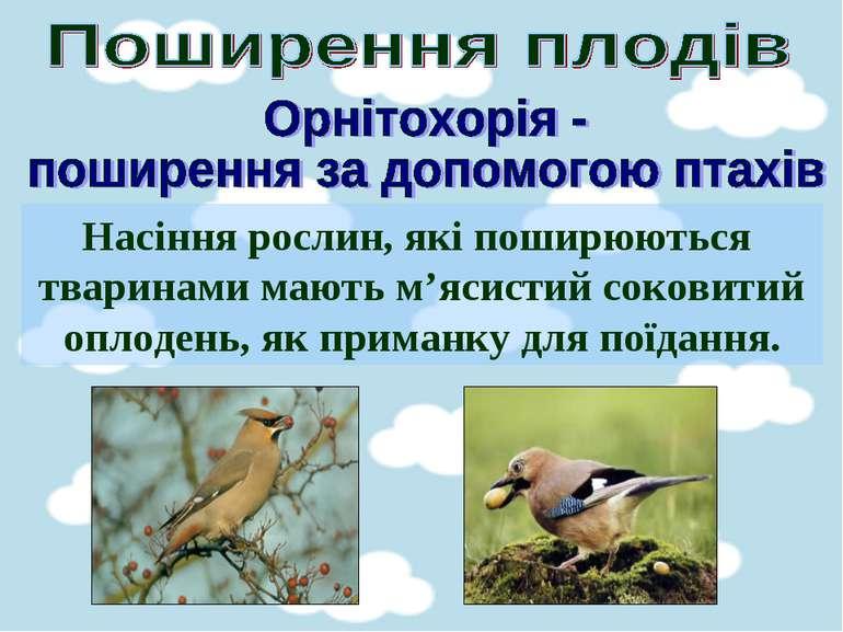 Насіння рослин, які поширюються тваринами мають м'ясистий соковитий оплодень,...