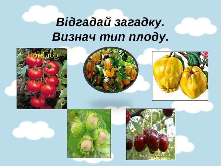 Відгадай загадку. Визнач тип плоду. Помідор