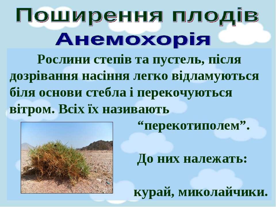 Рослини степів та пустель, після дозрівання насіння легко відламуються біля о...