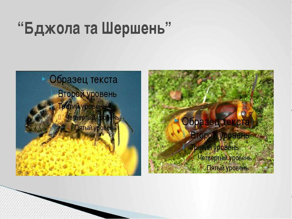 """Бджола та Шершень"""