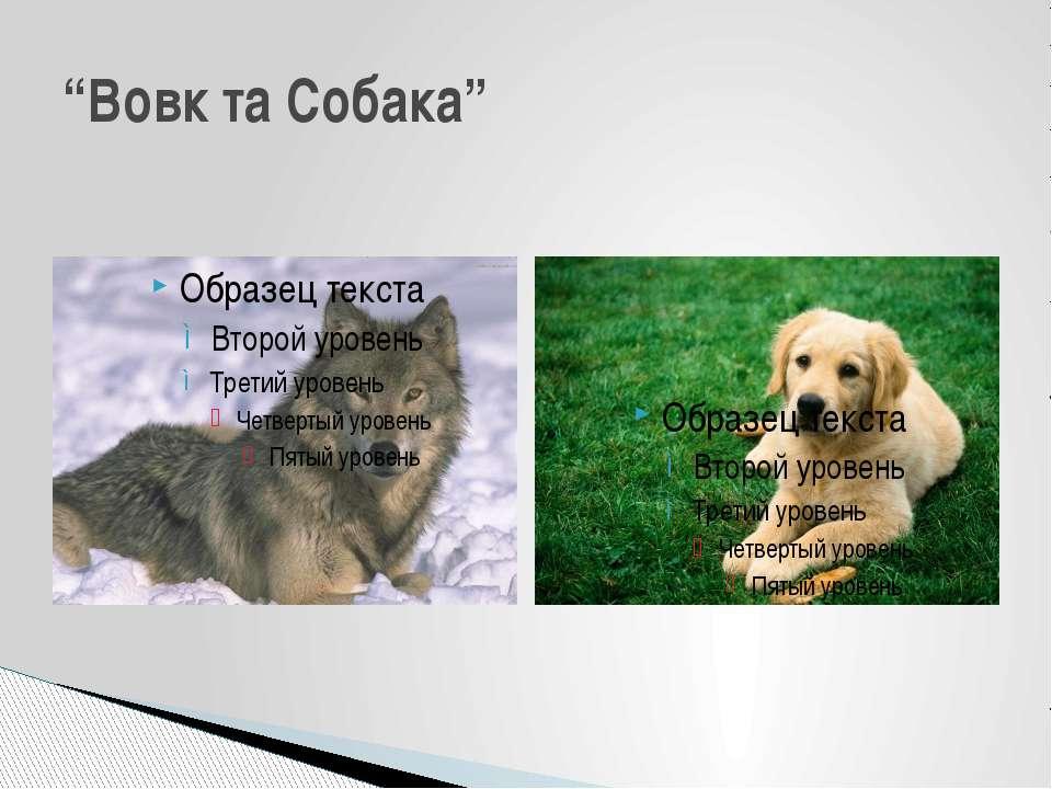 """Вовк та Собака"""