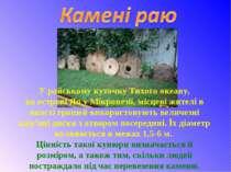 У райському куточку Тихого океану, наострові Япу Мікронезії, місцеві жителі...