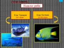 голова тулуб хвіст Парні плавці : грудні черевні Непарні плавці : спинні хвос...