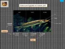 350 видів 3 500 видів 7 видів зміст