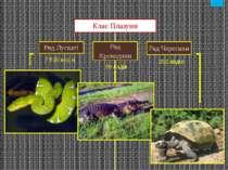 Черепахи Крокодили зміст Різноманітність Плазунів. відео відео відео відео