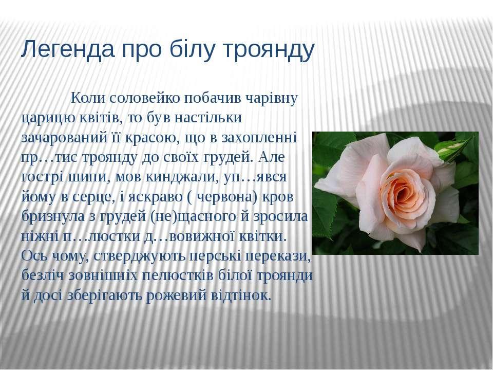 Легенда про білу троянду Коли соловейко побачив чарівну царицю квітів, то був...