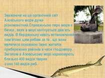 Зважаючи на це органічний світ Азовського моря дуже різноманітний.Справжньою ...