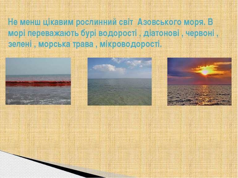 Не менш цікавим рослинний світ Азовського моря. В морі переважають бурі водор...