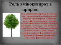 Роль амінокислрот в природі Роль амінокислот в природі в тому, що з них утвор...