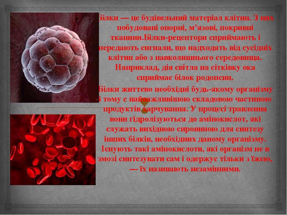 Білки — це будівельний матеріал клітин. З них побудовані опорні, м'язові, пок...
