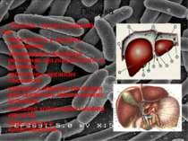Печінка - орган непарний, що: бере участь у процесі травлення; знешкоджує чуж...