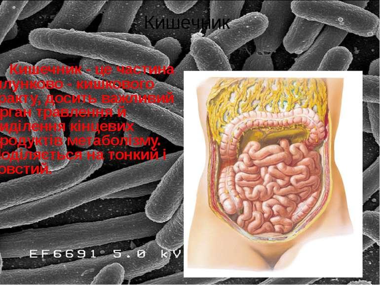 Кишечник - це частина шлунково - кишкового тракту, досить важливий орган трав...