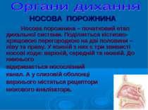НОСОВА ПОРОЖНИНА Носова порожнина – початковий етап дихальної системи. Поділя...