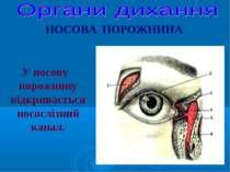 НОСОВА ПОРОЖНИНА У носову порожнину відкривається носослізний канал.