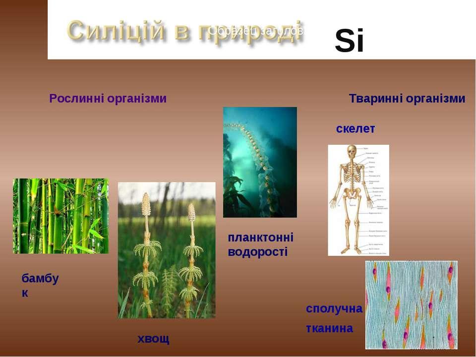 26,6% Образец заголовка Si Рослинні організми бамбук хвощ Тваринні організми ...