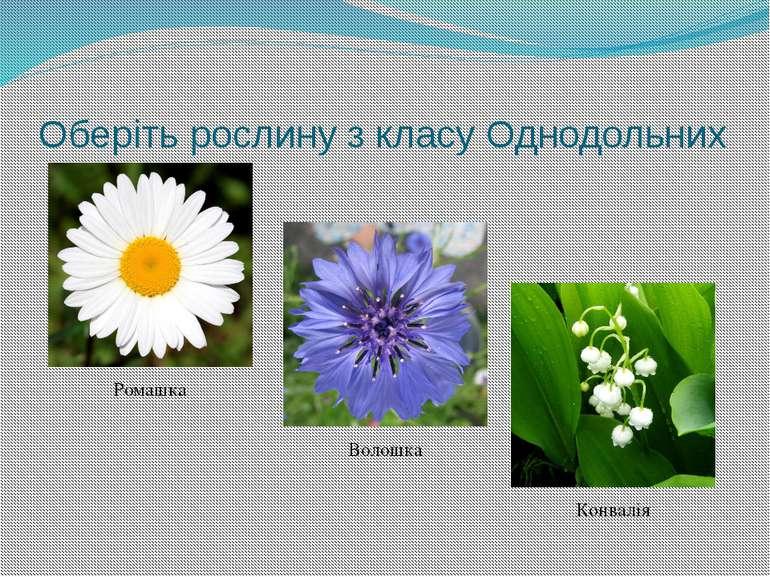 Листя якої рослини має сітчасте жилкування? Тюльпан Шафран Каштан