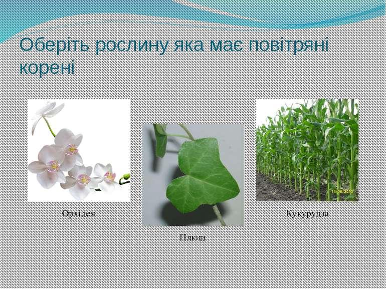 Яка з наведених рослин має складні листки? Вишня Троянда Пролісок