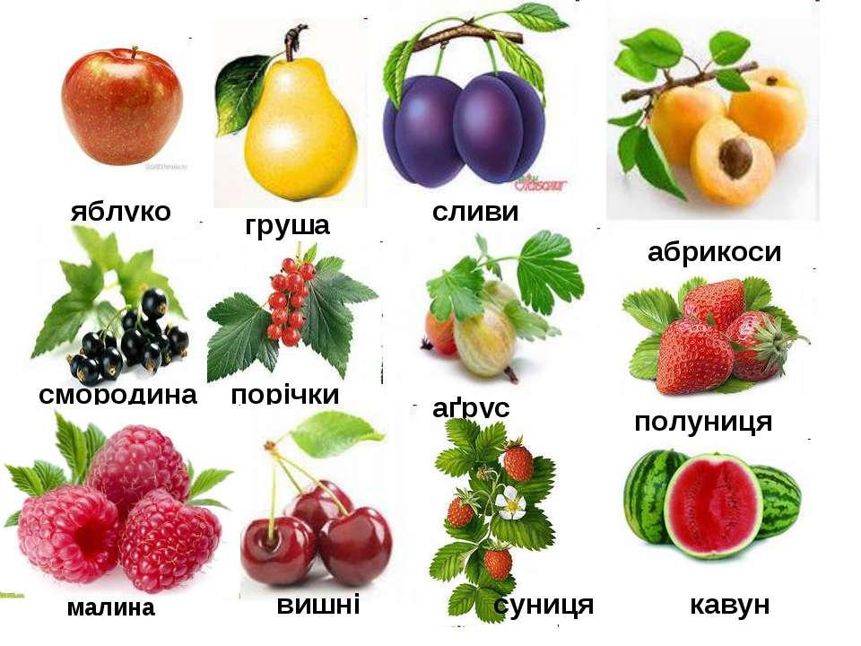 яблуко груша сливи абрикоси смородина порічки аґрус вишні малина полуниця сун...