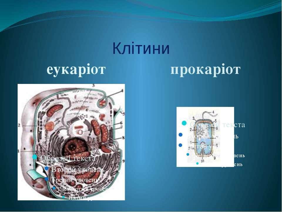 Клітини еукаріот прокаріот