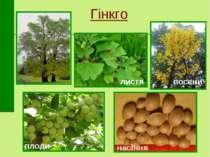 Гінкго листя восени плоди насіння