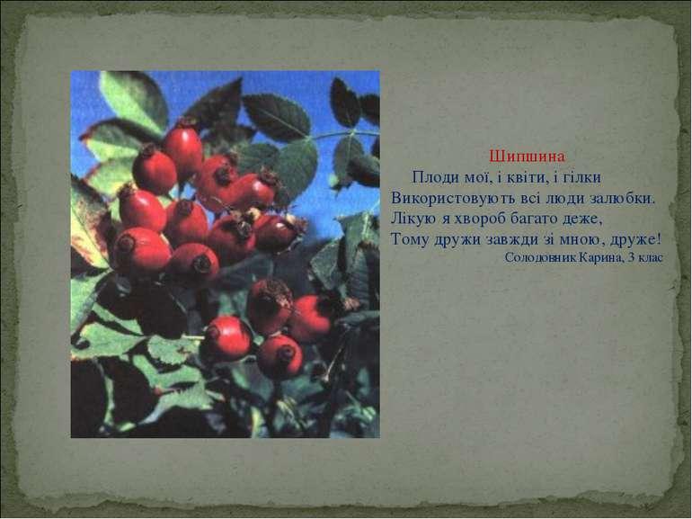 Шипшина Плоди мої, і квіти, і гілки Використовують всі люди залюбки. Лікую я ...
