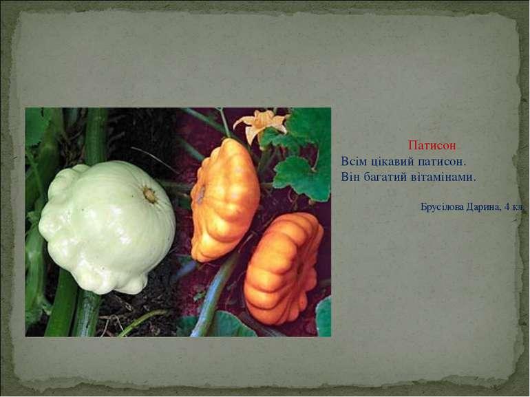 Патисон Всім цікавий патисон. Він багатий вітамінами. Брусілова Дарина, 4 кл.
