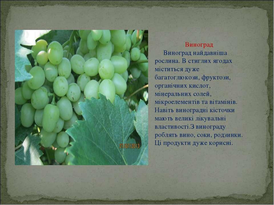 Виноград Виноград найдавніша рослина. В стиглих ягодах міститься дуже багатог...