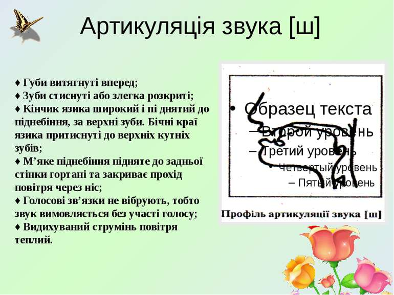 Артикуляцiя звука [ш] ♦ Губи витягнутi вперед; ♦ Зуби стиснутi або злегка роз...