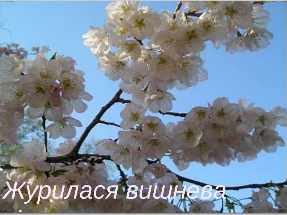 Журилася вишнева віть…
