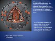 Модель ВІЛ, створена компанією Visual Science ВІЛ завдає удару по імунній сис...