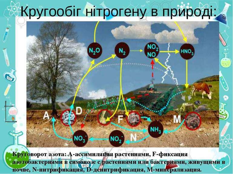 Кругообіг нітрогену в природі: Круговорот азота: А-ассимиляция растениями, F-...