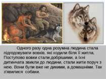 Одного разу одна розумна людина стала підгодовувати вовків, які ходили біля ї...