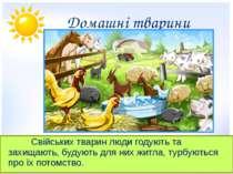 Домашні тварини Свійських тварин люди годують та захищають, будують для них ж...