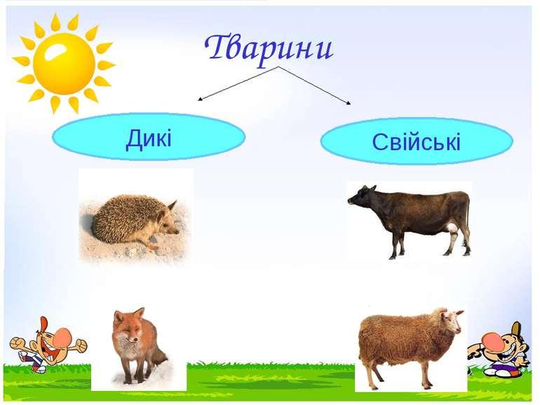 Тварини Дикі Свійські
