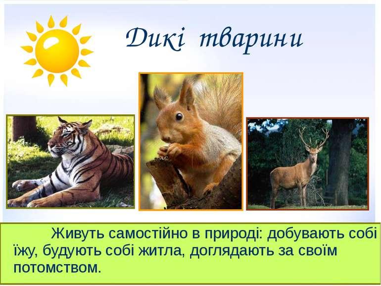 Дикі тварини Живуть самостійно в природі: добувають собі їжу, будують собі жи...