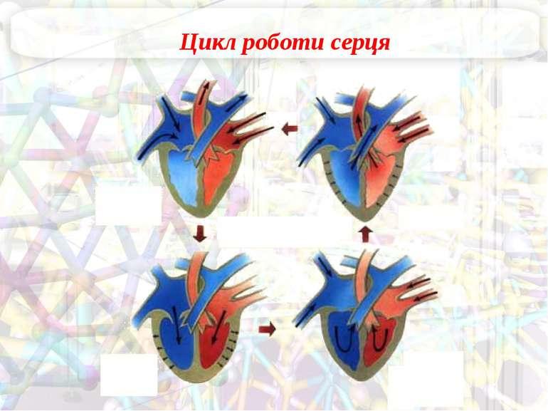 Цикл роботи серця