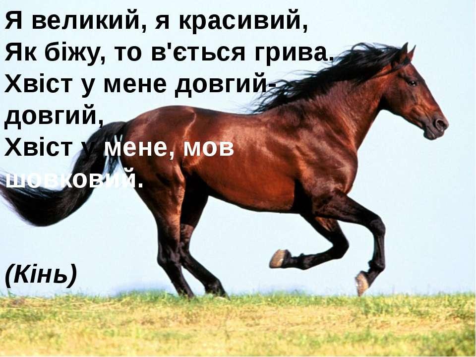 Я великий, я красивий, Як біжу, то в'ється грива. Хвіст у мене довгий- довг...