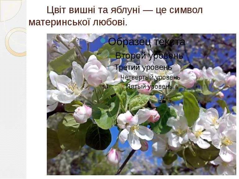 Цвіт вишні та яблуні — це символ материнської любові.