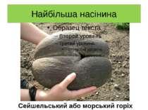 Найбільша насінина Сейшельський або морський горіх