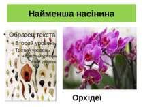 Найменша насінина Орхідеї орхідея
