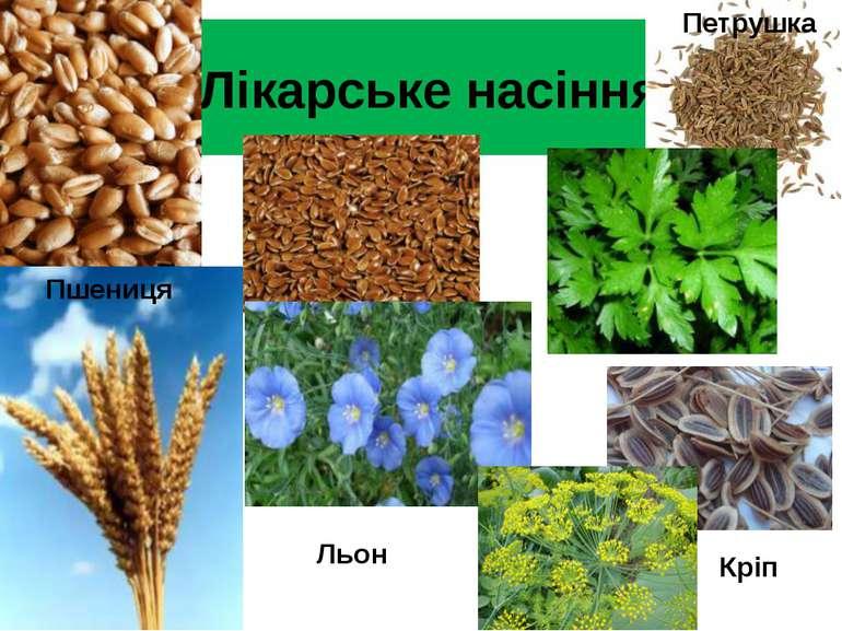 Лікарське насіння Пшениця Льон Петрушка Кріп